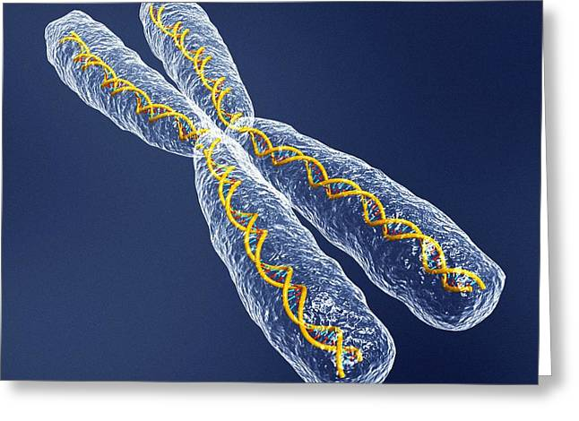 Helix Greeting Cards - Chromosome With Dna Greeting Card by Pasieka