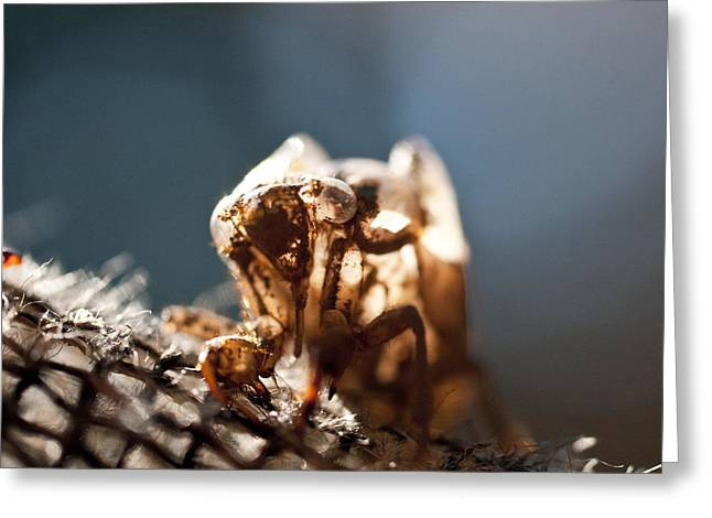 Cicada Greeting Cards - Cicada Shell  Greeting Card by Wilma  Birdwell