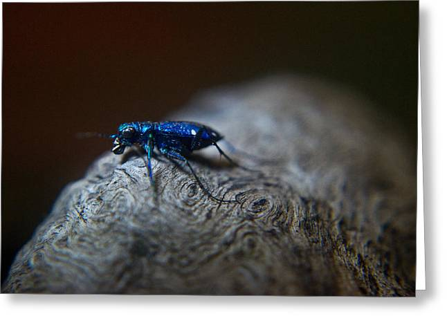 Predacious Greeting Cards - Cicindellidae a Family of Preditors Greeting Card by Douglas Barnett