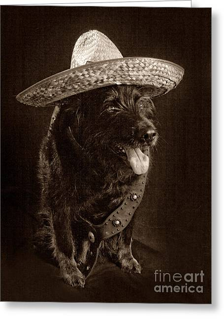 Hairy Wolf Greeting Cards - Cinco De Mayo Greeting Card by Denise Oldridge