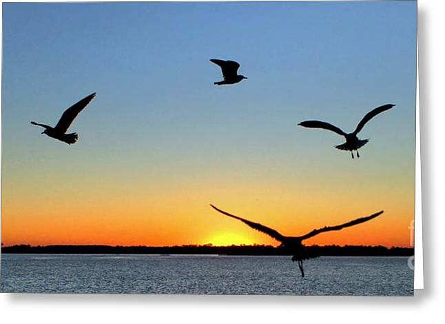 Flying Seagull Greeting Cards - Circle Meeting at Sunrise Greeting Card by Benanne Stiens