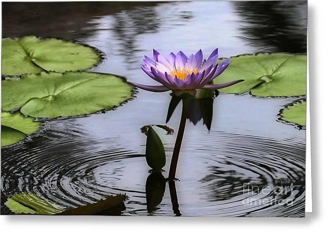 Water Garden Greeting Cards - Circle of Beauty Greeting Card by Sabrina L Ryan