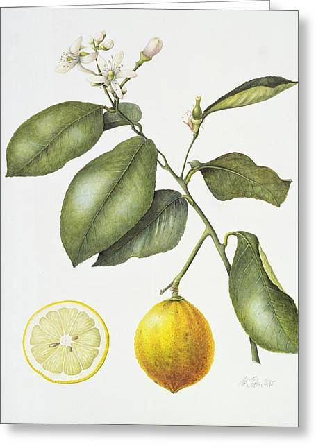 Lemon Greeting Cards - Citrus Bergamot Greeting Card by Margaret Ann Eden