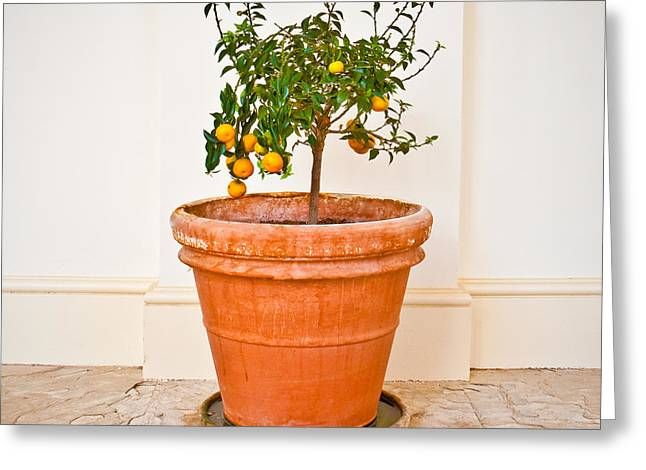 Immature Greeting Cards - Citrus plant Greeting Card by Tom Gowanlock