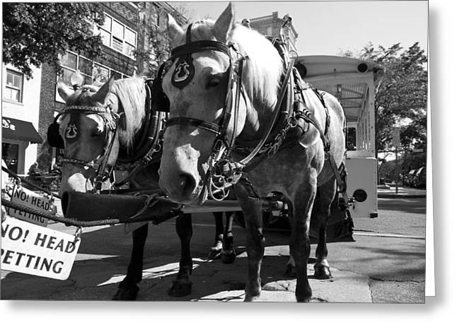 Horse And Cart Greeting Cards - City Life Greeting Card by Betsy A  Cutler