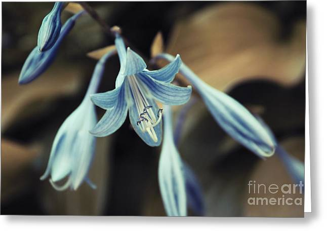 Blue Flowers Greeting Cards - Cladis 22 Greeting Card by Variance Collections