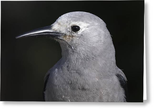 Beady Eyes Greeting Cards - Clarks Nutcracker Portrait Greeting Card by Sharon  Talson