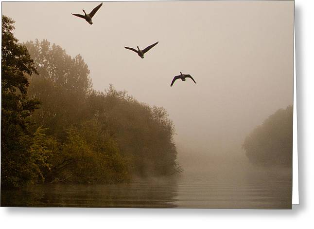 Flying Geese Greeting Cards - Classic Three Flying Geese Greeting Card by Dawn OConnor