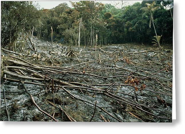Deforestation Greeting Cards - Clearing Of The Rainforest (deforestation) Greeting Card by Dr Morley Read