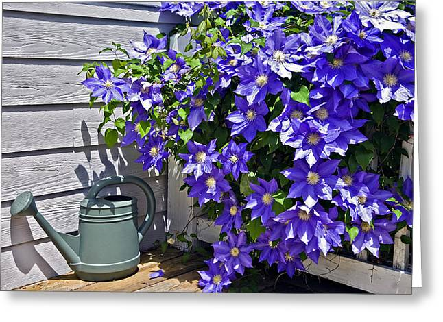 Susan Leggett Greeting Cards - Clematis and Watering Can Greeting Card by Susan Leggett