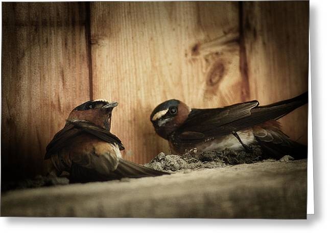Cliff Swallows 3 Greeting Card by Scott Hovind