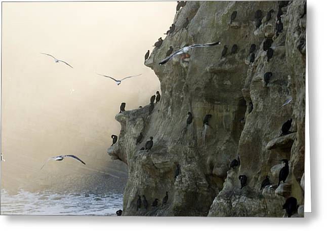 Images Of San Diego Greeting Cards - Cliffs With Roosting Cormorants Greeting Card by Tim Laman