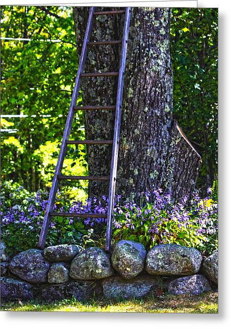 Tanya Chesnell Greeting Cards - Climb Greeting Card by Tanya Chesnell
