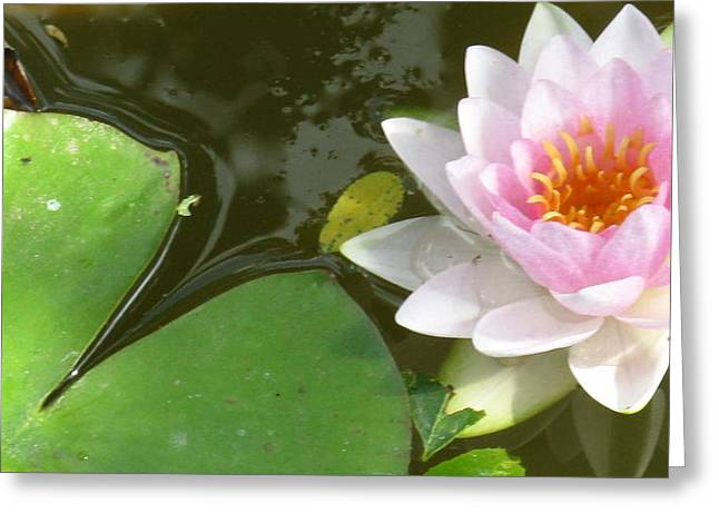 Close-up Lily Greeting Card by Debbie Finley