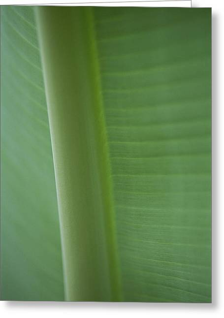 Patterns In Nature Greeting Cards - Close-up Of A Banana Leaf Greeting Card by Brian Gordon Green