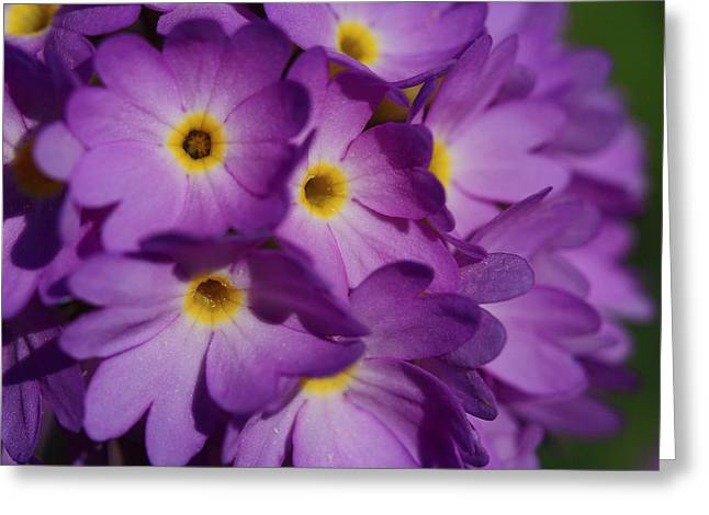 Close Up Of A Cluster Of Purple Greeting Card by Joe Petersburger