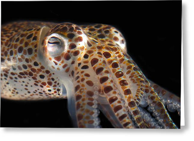 Close Up Of A Dwarf Cuttlefish, Sepiola Greeting Card by Darlyne A. Murawski