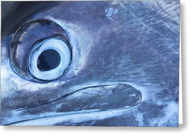 Caribbean Port Greeting Cards - Close Up Of A Marlin At The Marlin Greeting Card by Michael Melford
