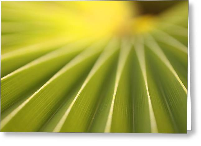 In Focus Greeting Cards - Close Up Of A Plant On The Island Greeting Card by Robert Postma