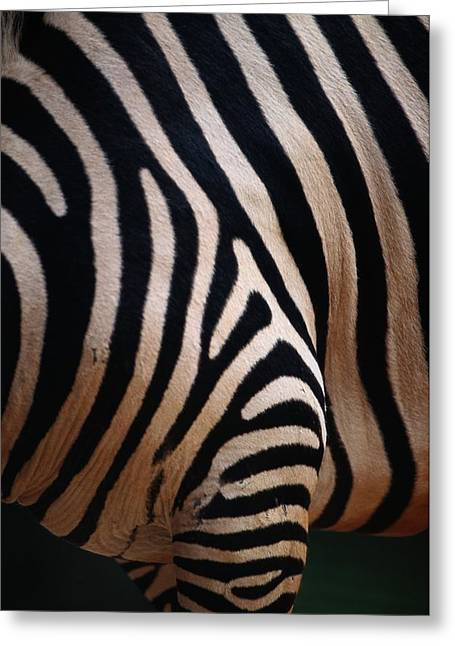 Perth Zoo Greeting Cards - Close Up Of A Zebras Stripes Greeting Card by Nick Caloyianis