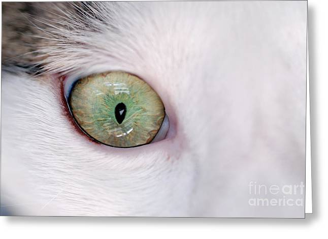 Sensory Perception Greeting Cards - Close-up of eye of domestic cat Greeting Card by Sami Sarkis