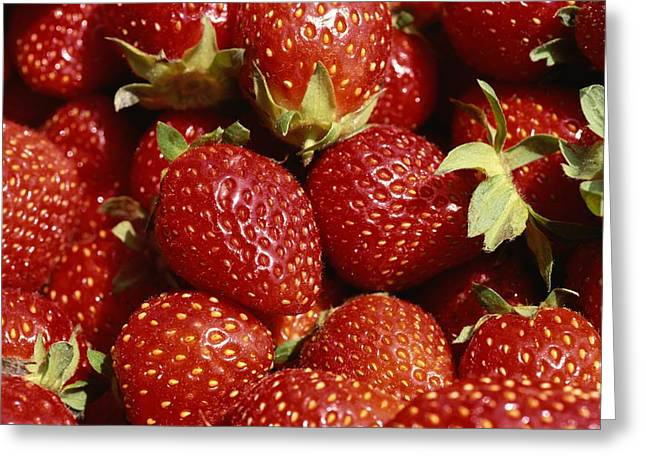 Berry Greeting Cards - Close-up Of Fresh Red Strawberries Greeting Card by Brian Gordon Green