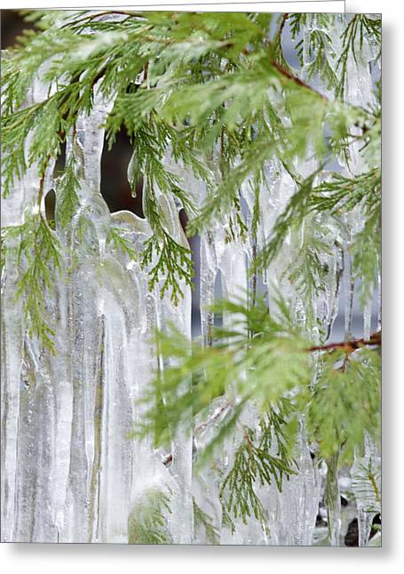 Close-up Of Ice Covered Tree Branch Greeting Card by James Forte