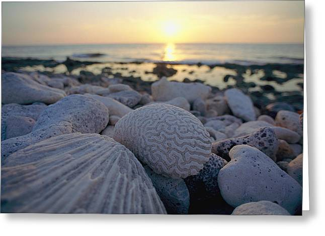 Close Views Greeting Cards - Close Up Of Shells And Pebbles Greeting Card by Bill Curtsinger