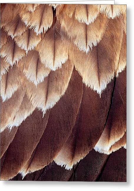 Black Kites Greeting Cards - Close Up Of The Feathers Of A Black Greeting Card by Jason Edwards