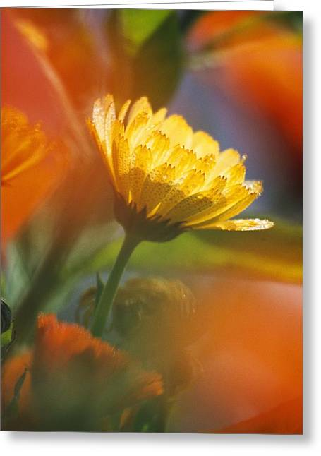 Tuttle Greeting Cards - Close-up Of Wildflower Greeting Card by Natural Selection Craig Tuttle