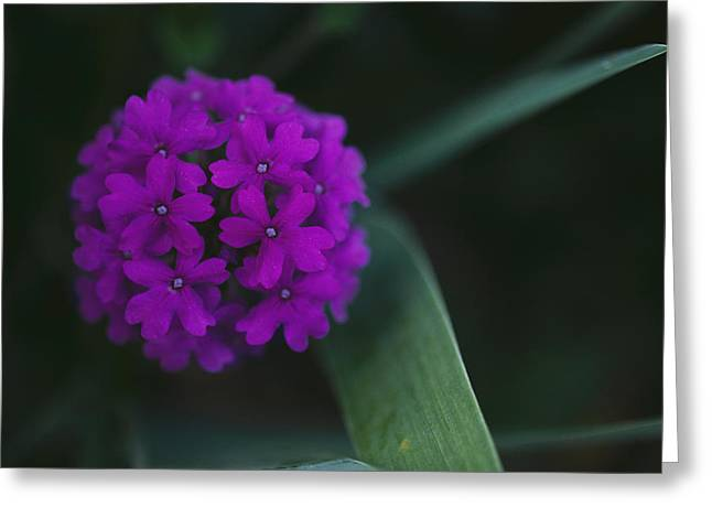 Refuges And Reserves Greeting Cards - Close View Of A Flower Greeting Card by Stephen Alvarez