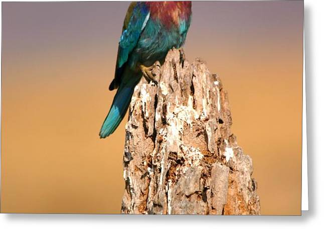 Close View Of A Lilac-breasted Roller Greeting Card by Roy Toft