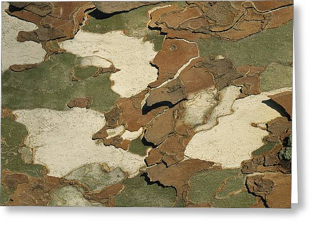Patterns In Nature Greeting Cards - Close View Of Patterned Tree Bark Greeting Card by Charles Kogod