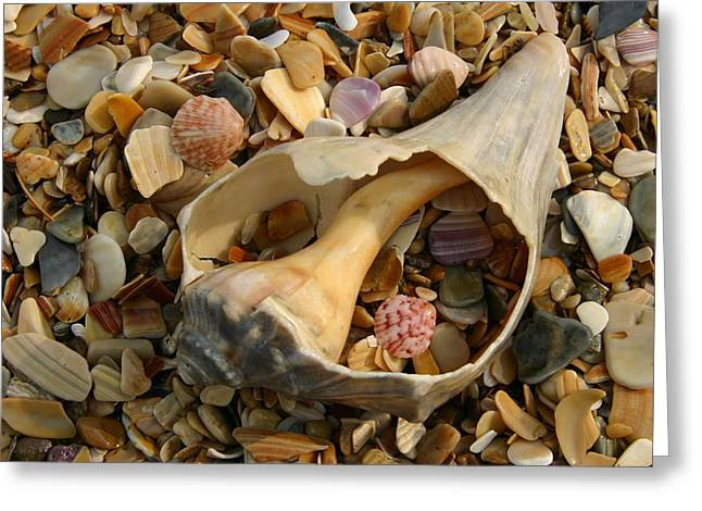 Shell Pattern Greeting Cards - Close View Of Surf-shattered Shell Greeting Card by Stephen St. John