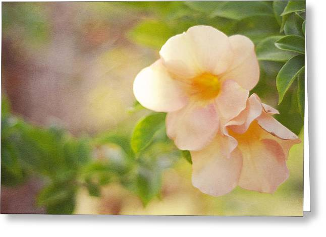 Flower Design Greeting Cards - Closeness Greeting Card by Jenny Rainbow