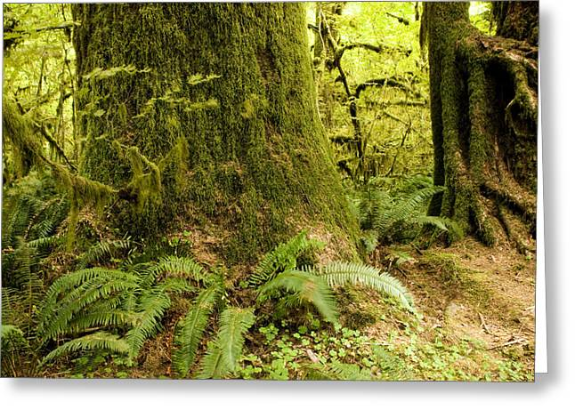 Lush Green Greeting Cards - Closeup Of A Tree Trunk And Ferns Greeting Card by Tim Laman