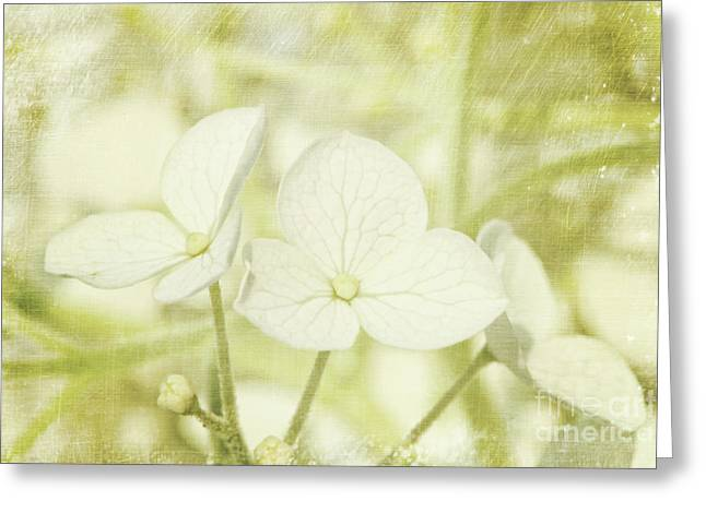 Dew Greeting Cards - Closeup of hydrangea flowers with vintage background Greeting Card by Sandra Cunningham