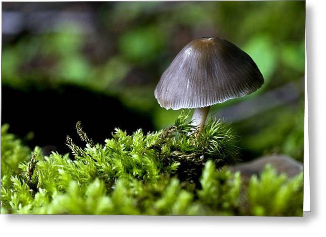 Close Focus Floral Greeting Cards - Closeup Of Mushroom Greeting Card by John Short