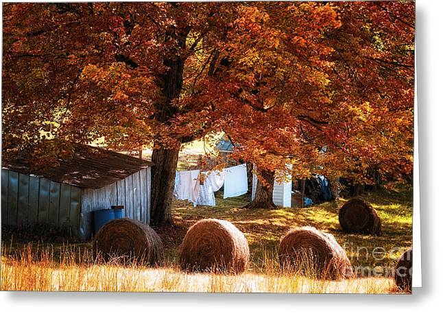 New Orleans Greeting Cards - Clothesline and Hay Bales - Color Greeting Card by Kathleen K Parker