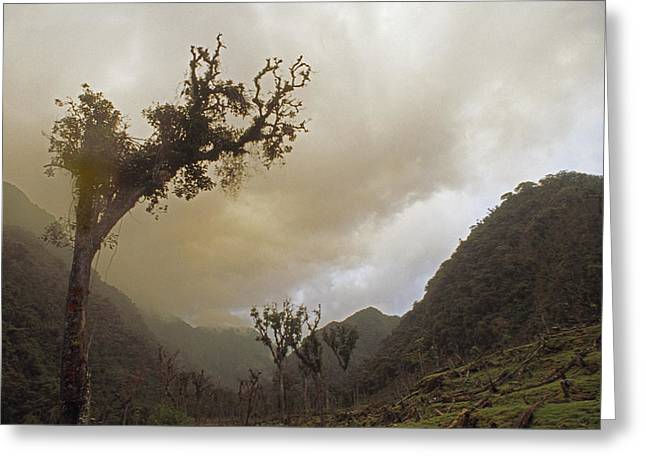 Deforestation Greeting Cards - Cloud Forests Above Rio Huabayacu Greeting Card by Gordon Wiltsie