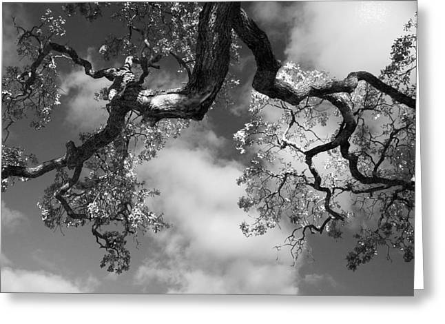Cloudy Oak Greeting Card by Laurie Search