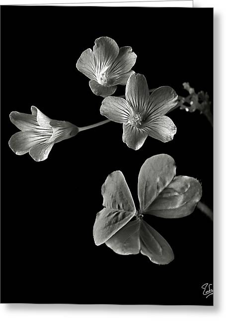 Flower Photos Greeting Cards - Clover in Black and White Greeting Card by Endre Balogh