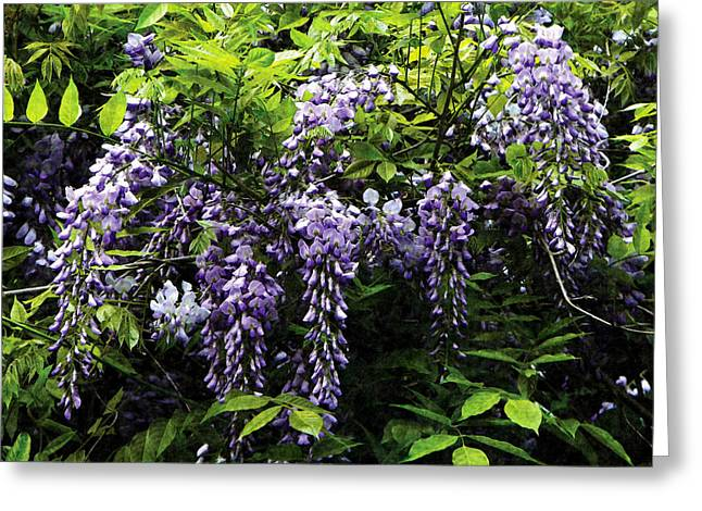Gardener Greeting Cards - Clusters of Wisteria Greeting Card by Susan Savad