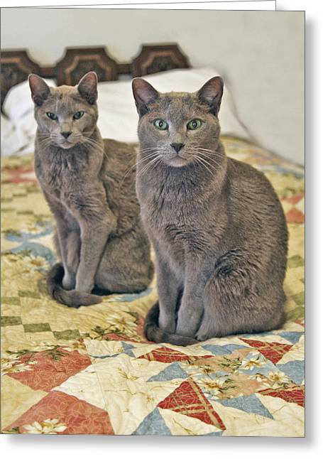 Cat Picture Greeting Cards - Clyde and Bonnie Greeting Card by James Steele
