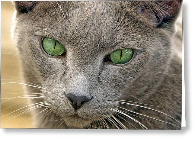 Pictures Of Cats Greeting Cards - Clyde and His Green Eyes Greeting Card by James Steele