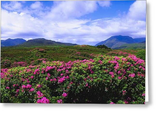 Co Galway Greeting Cards - Co Galway, Ireland Landscape Near Greeting Card by The Irish Image Collection