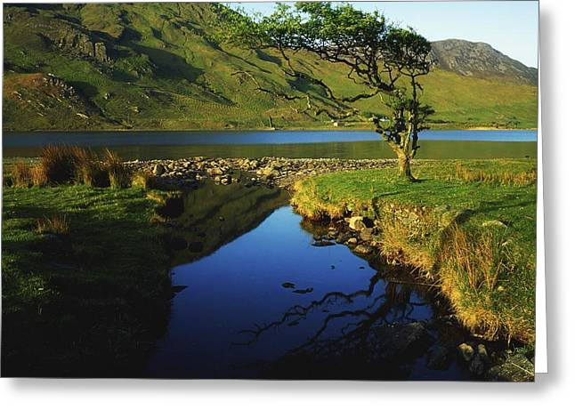 Reflections Of Trees In River Greeting Cards - Co Galway, Kylemore Lough, Benbaun Greeting Card by The Irish Image Collection