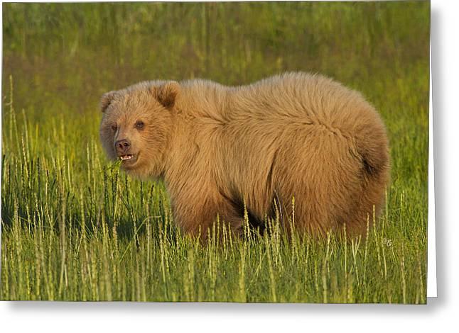 Coastal Brown Bear Greeting Card by David DesRochers