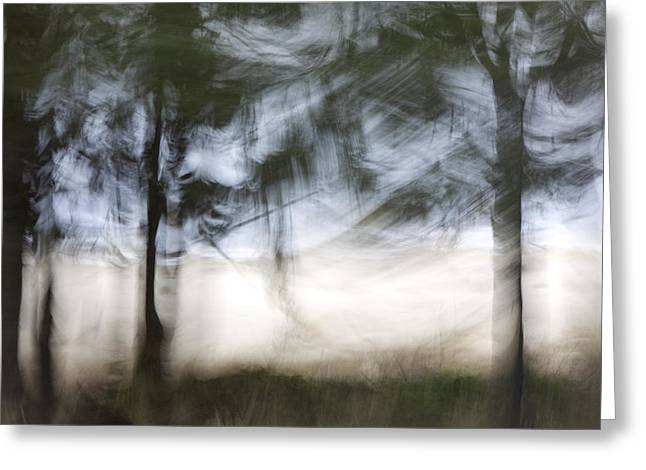 Coastal Trees Greeting Cards - Coastal Pines Greeting Card by Carol Leigh