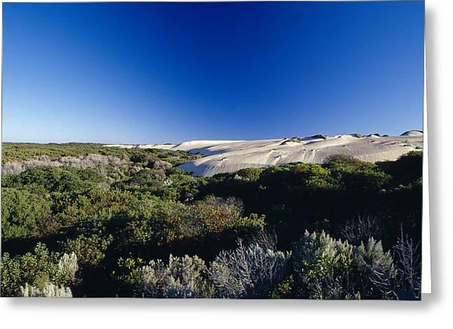 Tea Tree Greeting Cards - Coastal Tea Tree Shrubs And White Sand Greeting Card by Jason Edwards